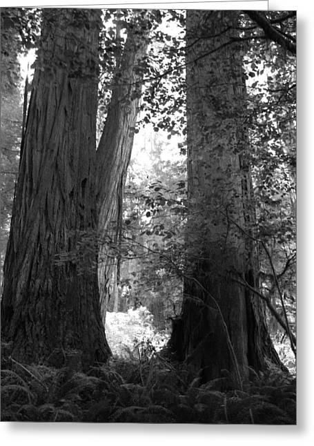 Redwood Pair Greeting Card by Kathleen Grace