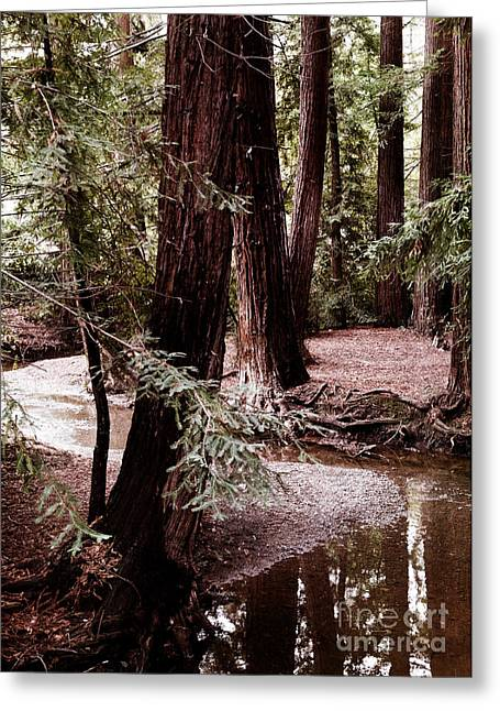Redwood Stream Reflections Greeting Card by Laura Iverson