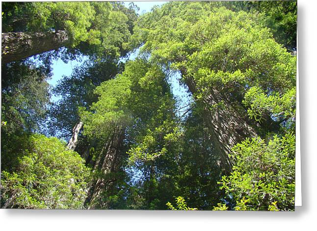 Redwood Trees Forest Fine Art Prints Greeting Card by Baslee Troutman