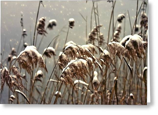 Reed In Snow Greeting Card