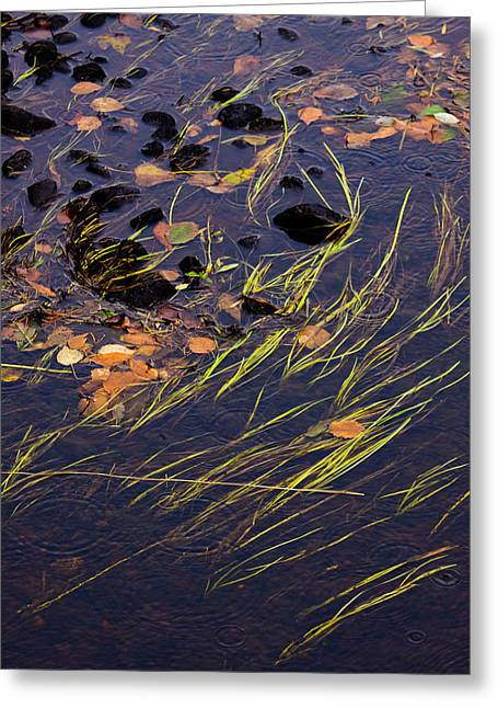 Reeds And Raindrops Greeting Card by Adam Pender