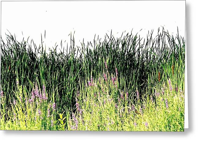 Reeds Lake Grass Greeting Card by Suzanne Fenster