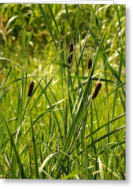 Reeds Greeting Card by Margaret Steinmeyer