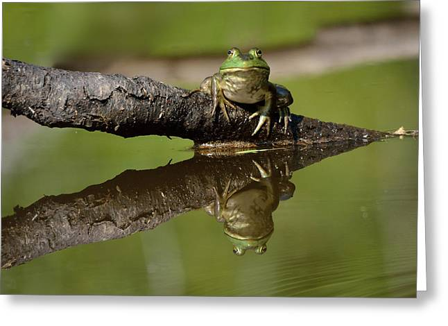 Reflecktafrog Greeting Card