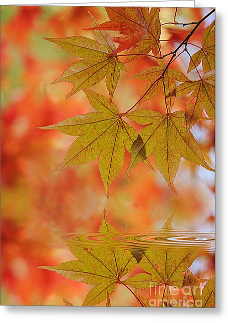 Reflect On Autumn Greeting Card by Jacky Parker