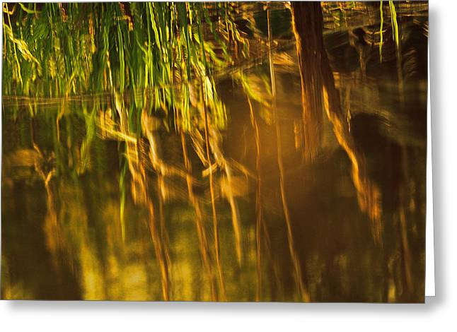 Reflecting On A Summer Morn Greeting Card