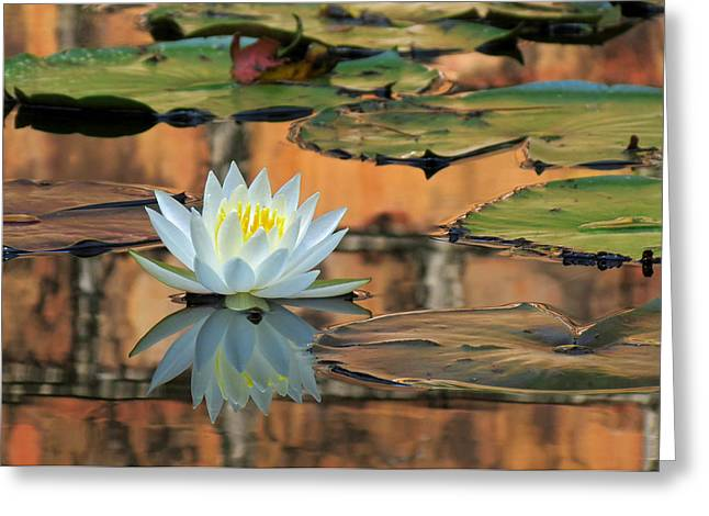 Greeting Card featuring the photograph Reflecting Pond by Deborah Smith