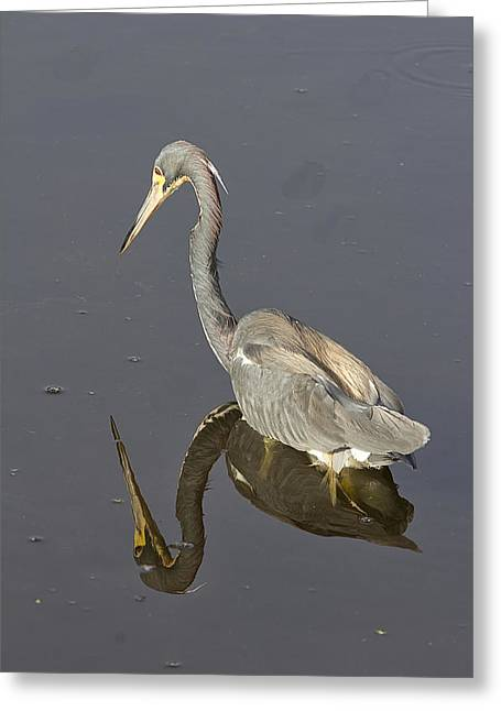 Reflection Greeting Card by Anne Rodkin