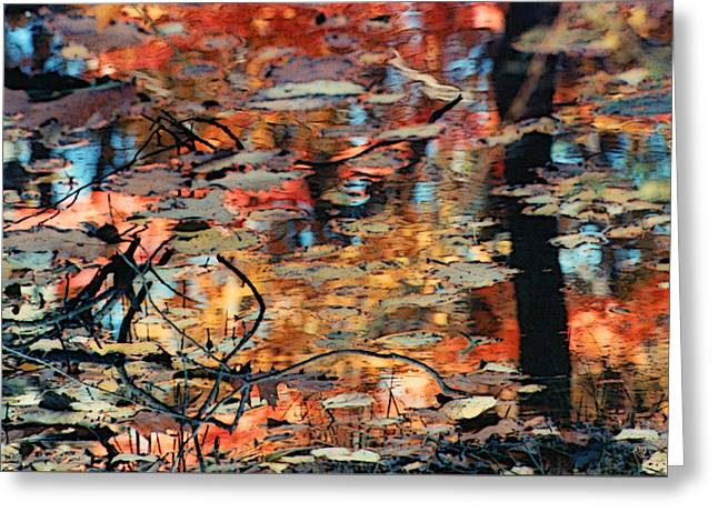 Reflection Greeting Card by Barbara Middleton