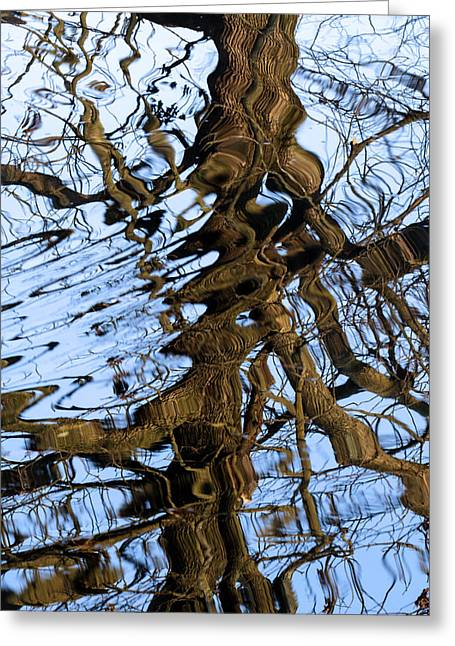 Reflection Greeting Card by David Lester