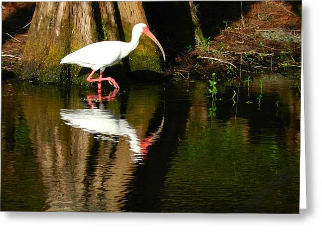 Reflection Greeting Card by Don L Williams