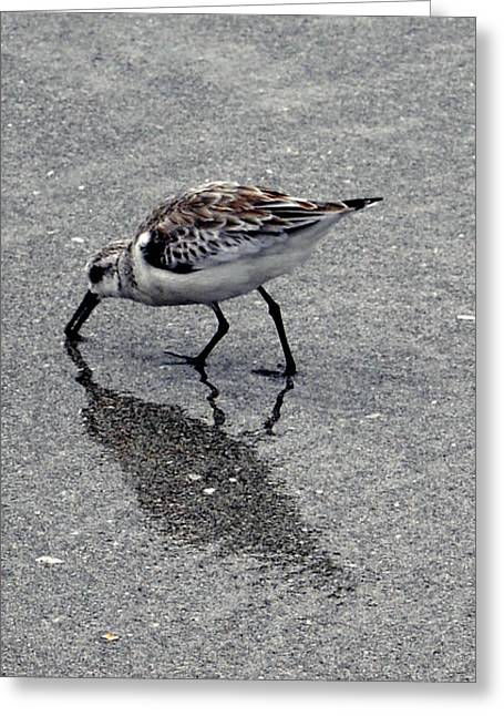 Reflection Of A Lonely Bird Greeting Card