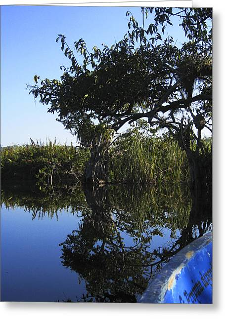 Greeting Card featuring the photograph Reflection Of Arched Branches by Anne Mott