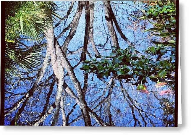 #reflection #tree #cool #popularphoto Greeting Card by Mandy Shupp