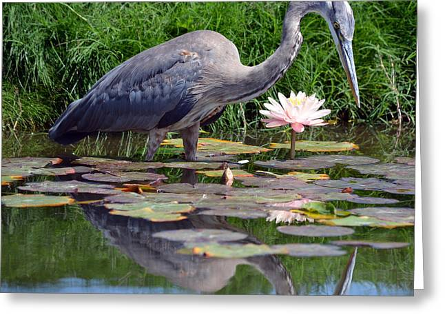Reflections At Lilly Pond Greeting Card