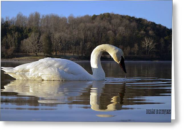 Greeting Card featuring the photograph Reflections by Brian Stevens