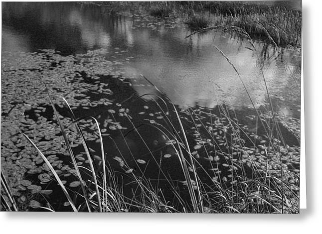 Greeting Card featuring the photograph Reflections In The Pond by Kathleen Grace