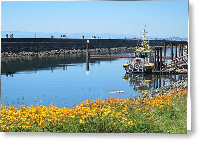 Reflections Of Ogden Point Greeting Card