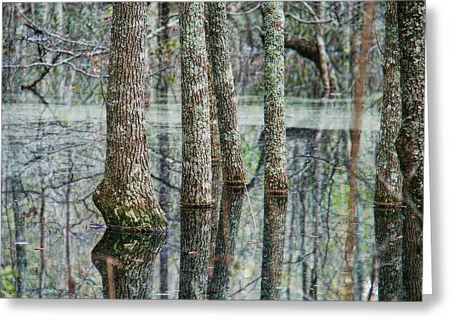 Reflections Of The Swamp Greeting Card by Mary Hershberger