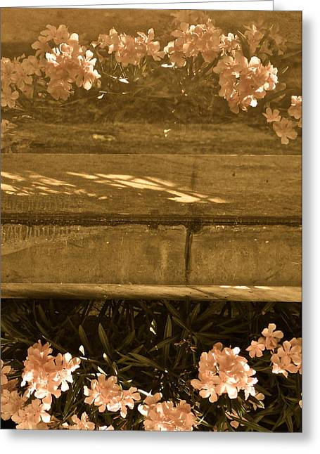 Reflections Greeting Card by Rachel Rodgers