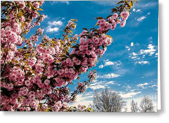 Refreshing Greeting Card by Robert Bales
