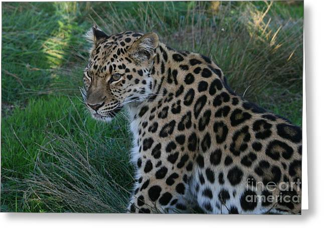 Relaxing Leopard Greeting Card by Carol Wright