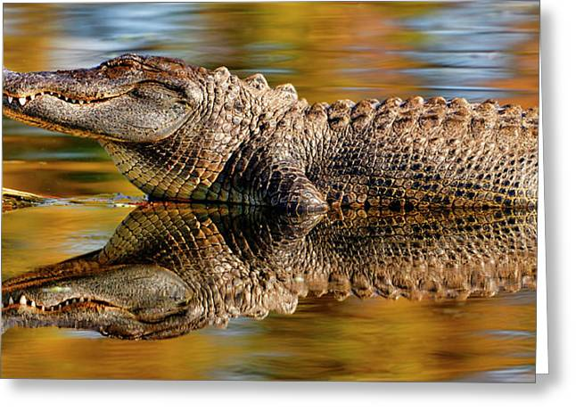 Relection Of An Alligator Greeting Card