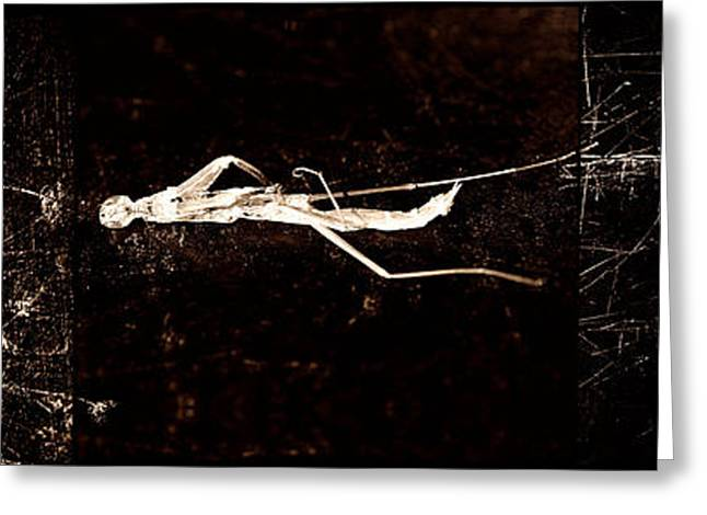 Remains Greeting Card by Fine Art  Photography