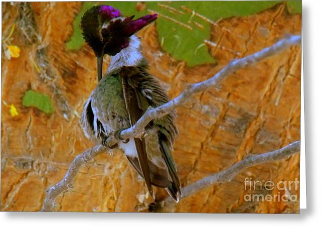 Greeting Card featuring the photograph Hummingbird Nap by Mistys DesertSerenity
