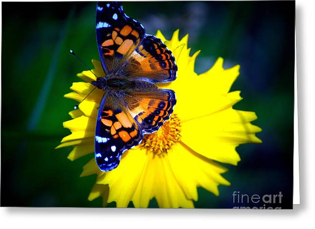 Resting Butterfly Greeting Card by Kevin Fortier