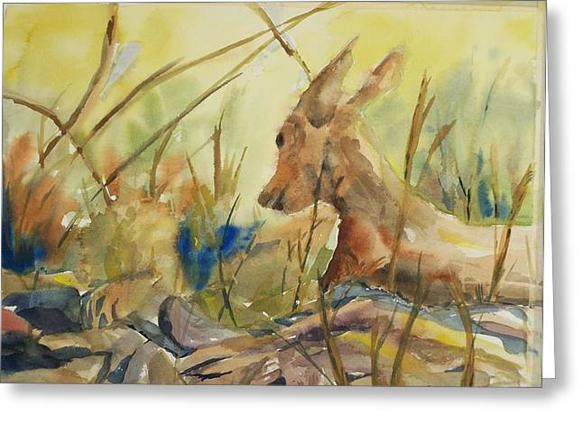 Resting Doe Greeting Card by Barbara McGeachen