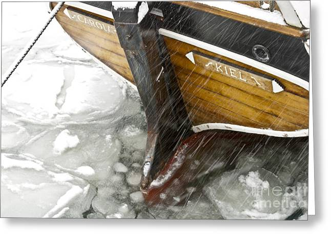 Resting In Ice Greeting Card