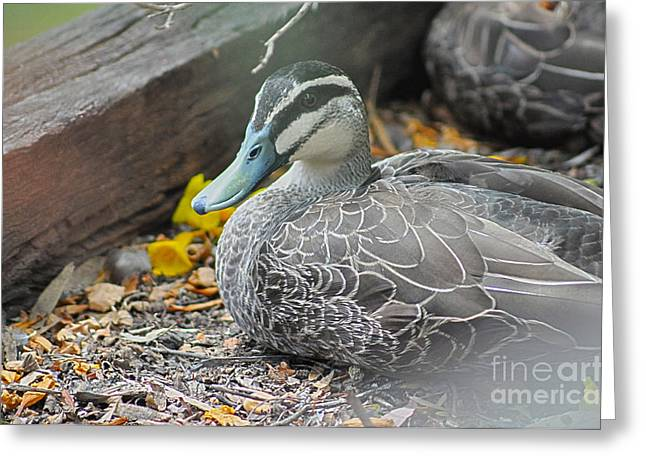Resting Greeting Card by Joanne Kocwin