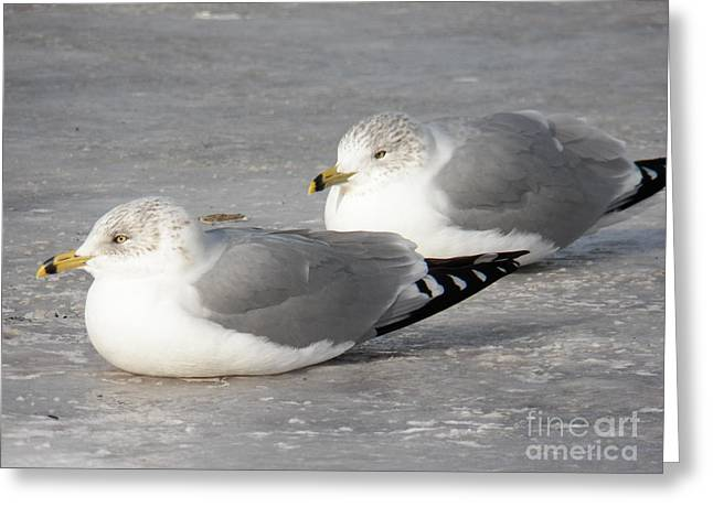 Resting On The Ice Greeting Card by Judy Via-Wolff