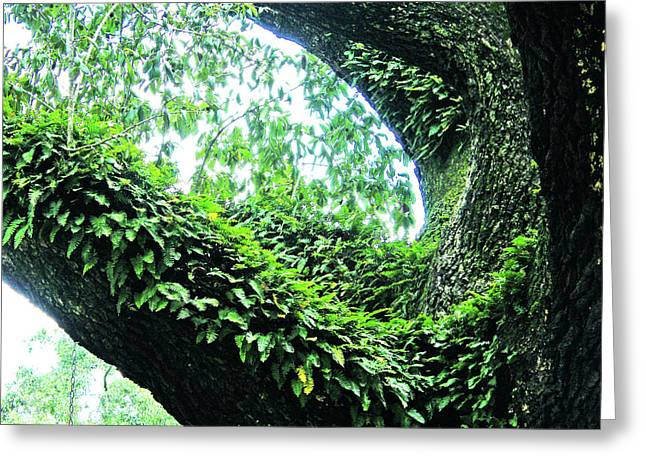 Greeting Card featuring the photograph Resurrection Fern by Lizi Beard-Ward