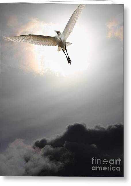 Return To Eternity . Vertical Cut Greeting Card by Wingsdomain Art and Photography