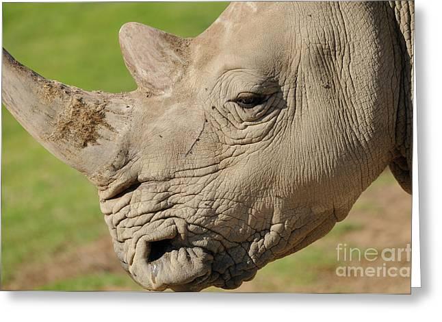 Rhino Greeting Card by Marc Bittan