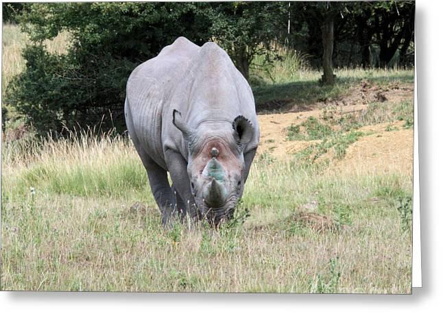Rhinocerous 13 Greeting Card by Ruth Hallam