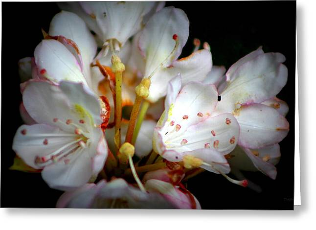 Rhododendron Explosion Greeting Card by Deborah  Crew-Johnson
