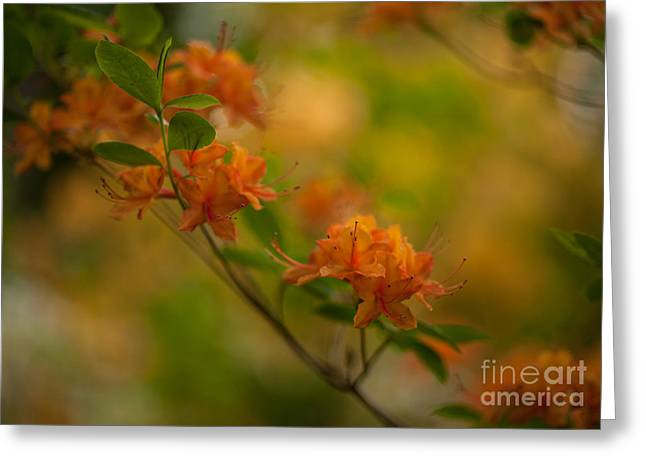 Rhododendron Impressions Greeting Card