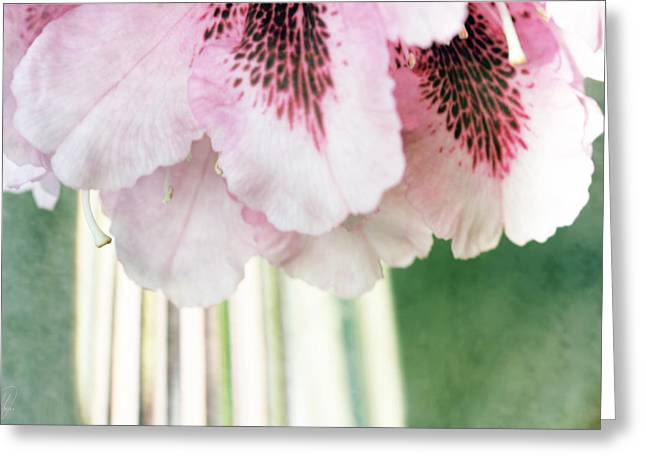 Rhododendron Refraction Greeting Card by Margaret Hormann Bfa