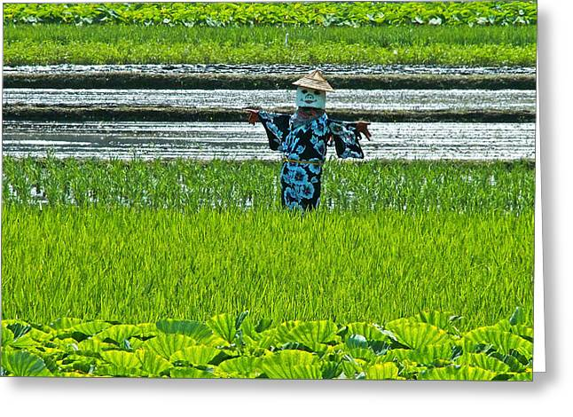 Rice Field - Okinawa Greeting Card
