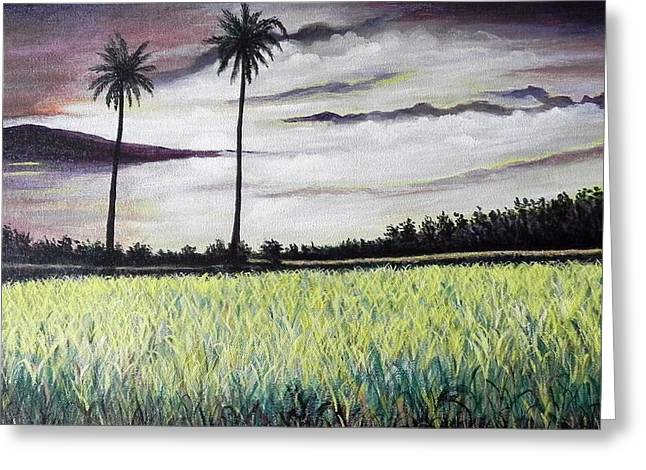 Rice Field  Greeting Card by Usha Rai