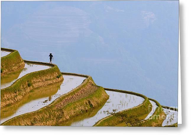 Rice Terraces Of Yuanyang  Yunnan China Greeting Card