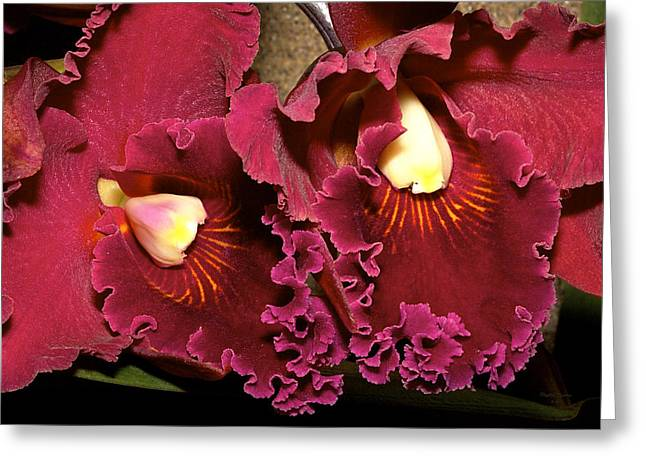 Rich Burgundy Orchids Greeting Card