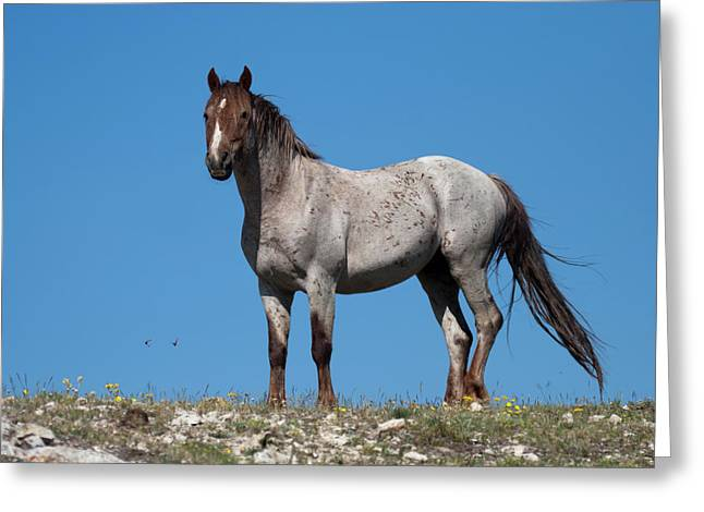 Ridgetop Mustang Greeting Card