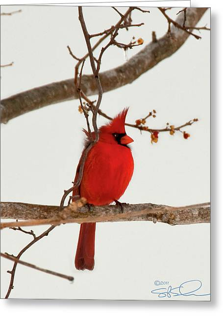 Righteous Cardinal Greeting Card