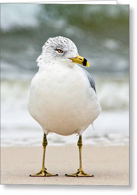 Greeting Card featuring the photograph Ring-billed Gull by Susi Stroud
