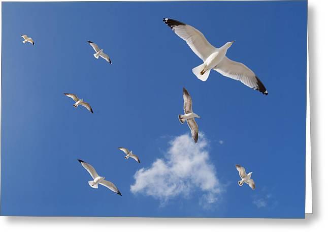 Ring Billed Gulls Overhead Greeting Card by Patrick M Lynch