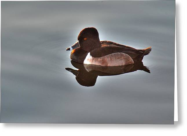 Greeting Card featuring the photograph Ring-necked Duck by Tam Ryan